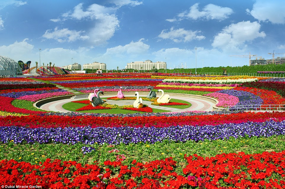 Dubai Miracle Garden is world's biggest flower garden. It is situated in the North West Quadrant of Arabian Ranches interchange