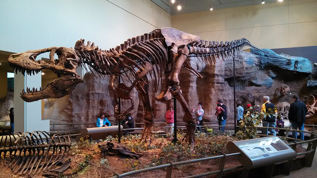 14. The first complete Tyrannosaurus Rex skeleton can be found in the Carnegie Museum in Pittsburgh.