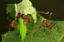 Los insectos están desapareciendo y su extinción amenaza con destruir el medioambiente