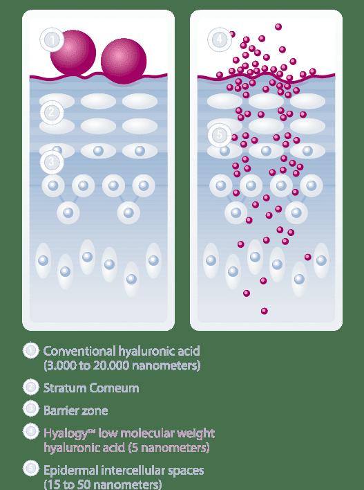 חומצה היאלורונית הינה חומר טבעי הנמצא בגופינו והינה מורכבת ממספר רב של מולקולות סוכר הקשורות ביניהן.