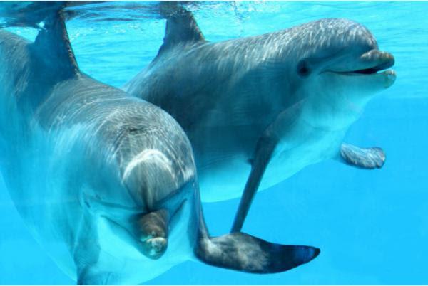 20 tập tính kỳ lạ của các loài động vật mà có thể bạn chưa biết