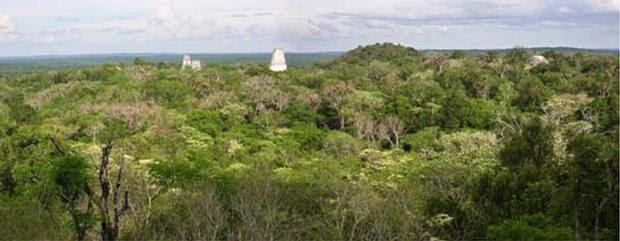 bosque tikal - Resuelto el misterio de Tikal, una de las mayores capitales del Imperio Maya