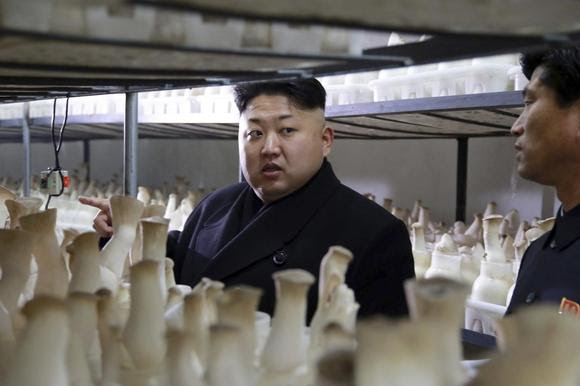 North Korean leader Kim Jong Un gives field guidance to the newly-built Pyongyang City Mushroom Farm in this undated photo released by North Korea's Korean Central News Agency (KCNA) in Pyongyang January 10, 2015. REUTERS/KCNA