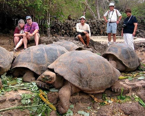 rùa khổng lồ, hòn đảo, đại dương