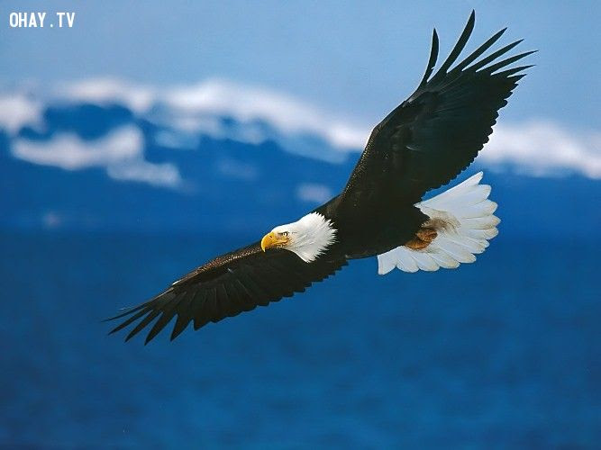 7 nguyên tắc sống bất di bất dịch của đại bàng