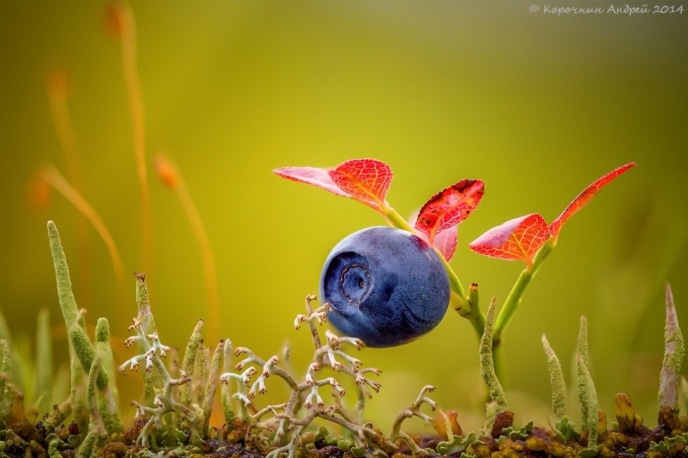 bestofnatgeo12 best pictures of the year f-rom National Geographic