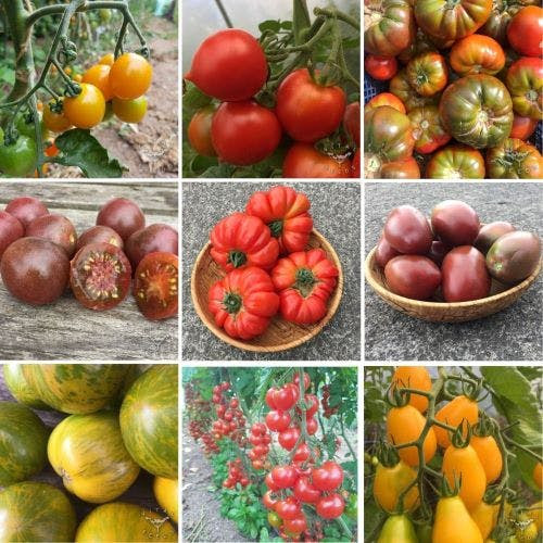Our great tomato varieties :)