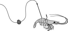 Shrimp fishing rig