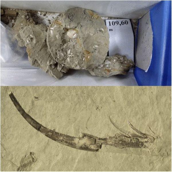 Muestras fósiles