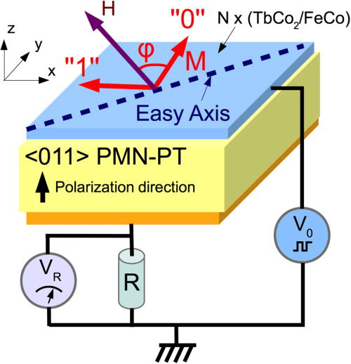 Magnetoelectric write and read operations in a stress-mediated multiferroic memory cell
