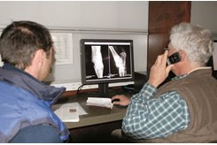 Potential buyers and veterinarians review digital X-rays at Keeneland's repository