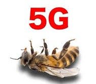 5G Kill Bees Now, Will Sterilize Entire USA for Chinese and Eric Shcmidt!