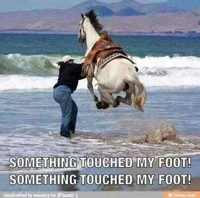Must be a                                                           Californian                                                           horse lol