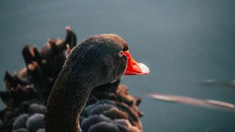 Predecir lo impredecible: aprenden a pronosticar los 'cisnes negros'