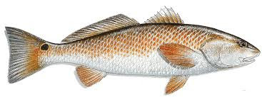 Image result for Fish