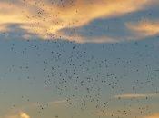 Los mosquitos pueden transmitir enfermedades potencialmente mortales como la malaria y el dengue.