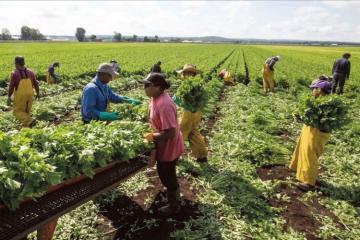 Solicitan al presidente Sagasti promulgar ley que promueve asociatividad de agricultores y ganaderos en cooperativas