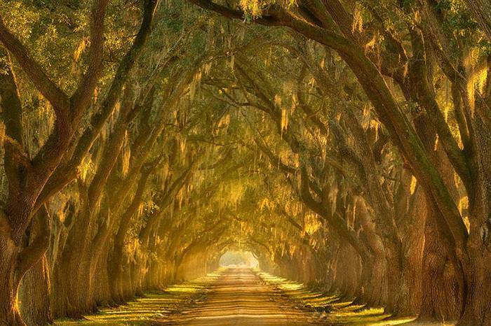beautiful tree tunnels