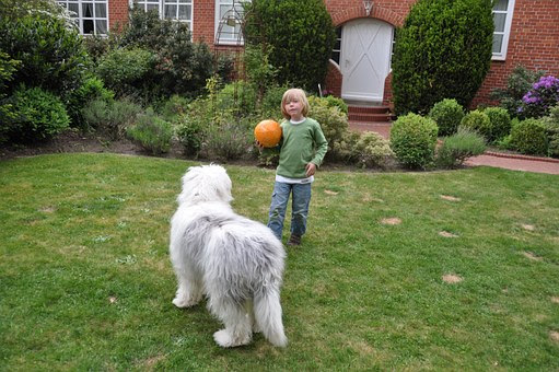 Dog training in front yard with a kid