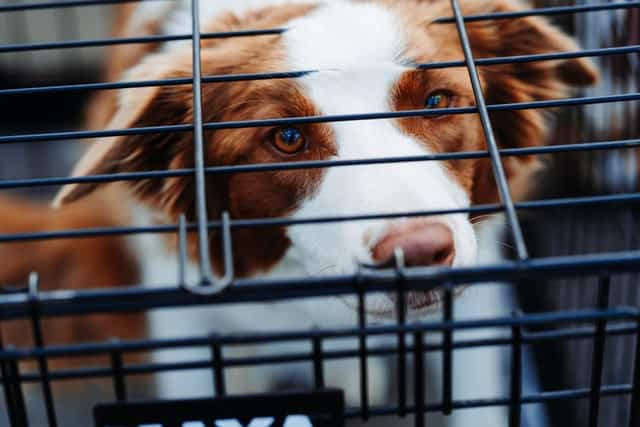 How to make your dog's crate feel like home