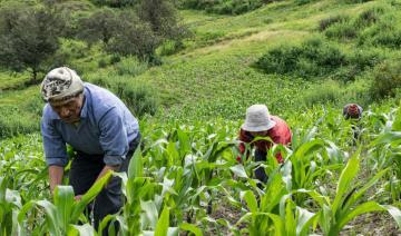 Junta Nacional del Café: MEF bloquea promulgación de ley a favor de cooperativas agrarias