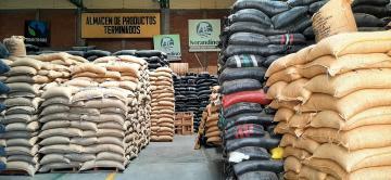 Cooperativa Norandino proyecta exportar 500 mil quintales de café esta campaña