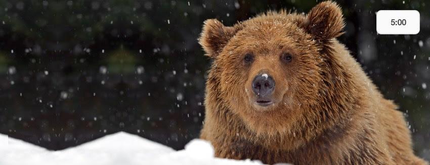 Mystery Doug Bears