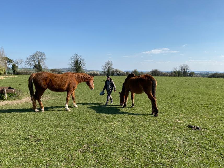 Fanette et les chevaux