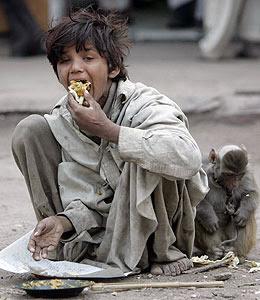 dar de comer al hambriento