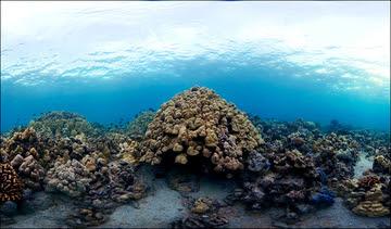 Hawaii Ecosystem