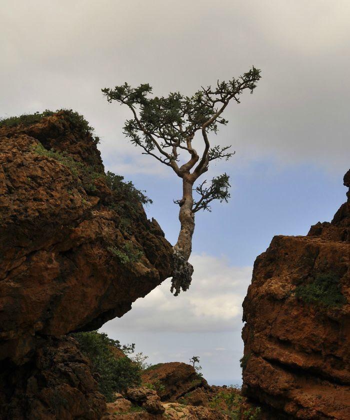 На краю дерево, живучесть, жизнь, мир, планета, растительность, фото