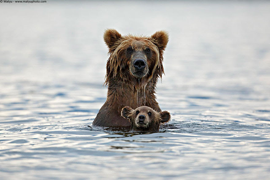 http://www.boredpanda.com/cute-animal-parenting/?image_id=animal-parents-9.jpg