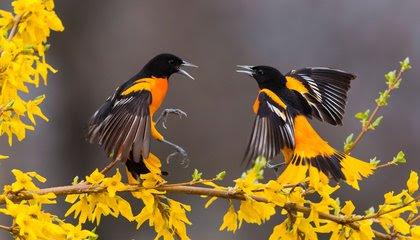 North America Has Lost Nearly 3 Billion Birds Since 1970