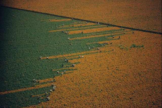 beautiful fields