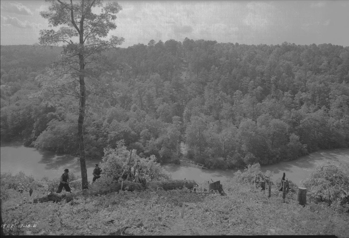Black and white photograph of a group of lumberjacks cutting and sawing trees in a large wooded area.