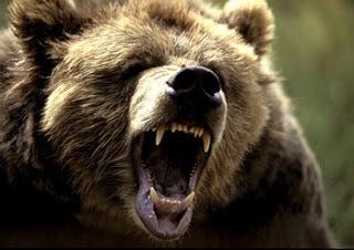 mama-bear.jpg