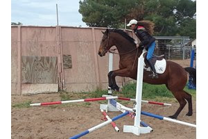 Inside Straight schools over cross rails with Melanie Hall aboard at Manner Farm in Glendale, Ariz.