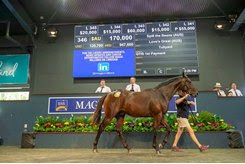 A Spill The Beans colt brings the co-highest price on Day 2 of the Magic Millions Gold Coast March Sale
