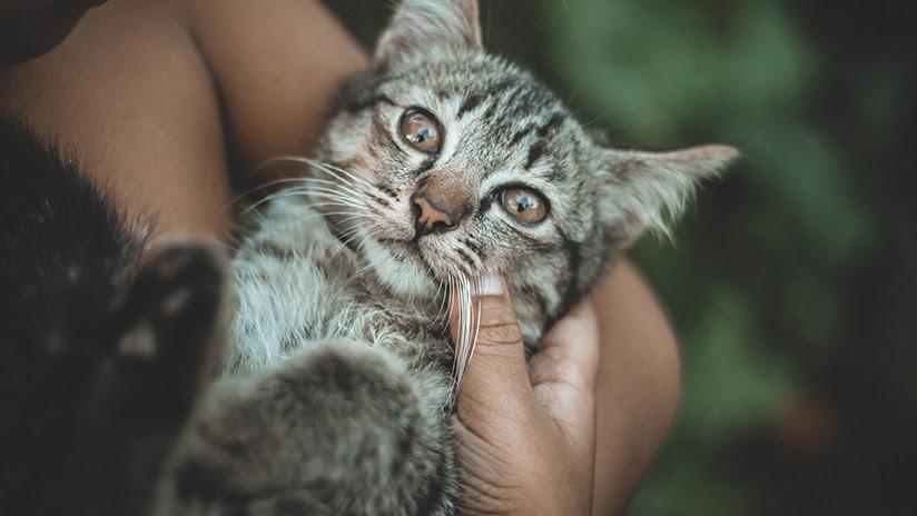 Una joven británica queda paralizada tras adoptar a una gata callejera