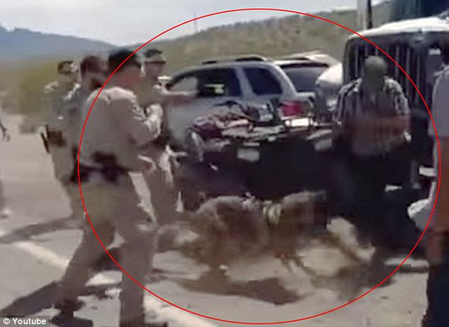Violent: An officer is seen firing a taser at Ammon Bundy as an aggressive police dog goes after him