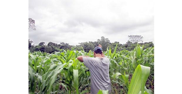 Comunidad Cuauhtémoc Cárdenas, Palenque, Chiapas. Foto: Hermann Bellinghausen