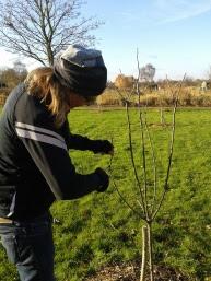 Pruning Fruit Trees.jpg