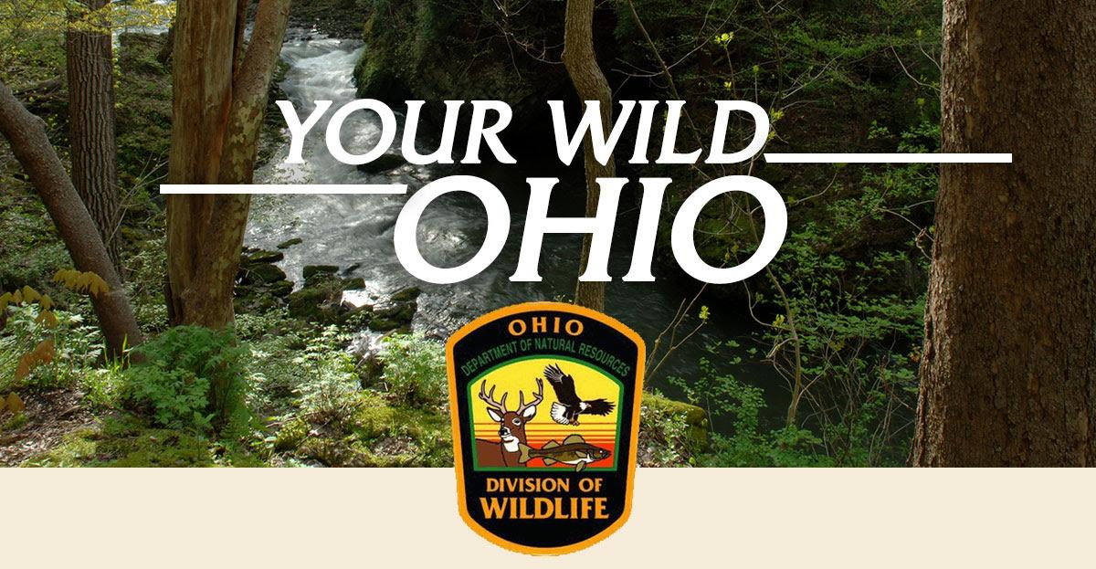Your Wild Ohio