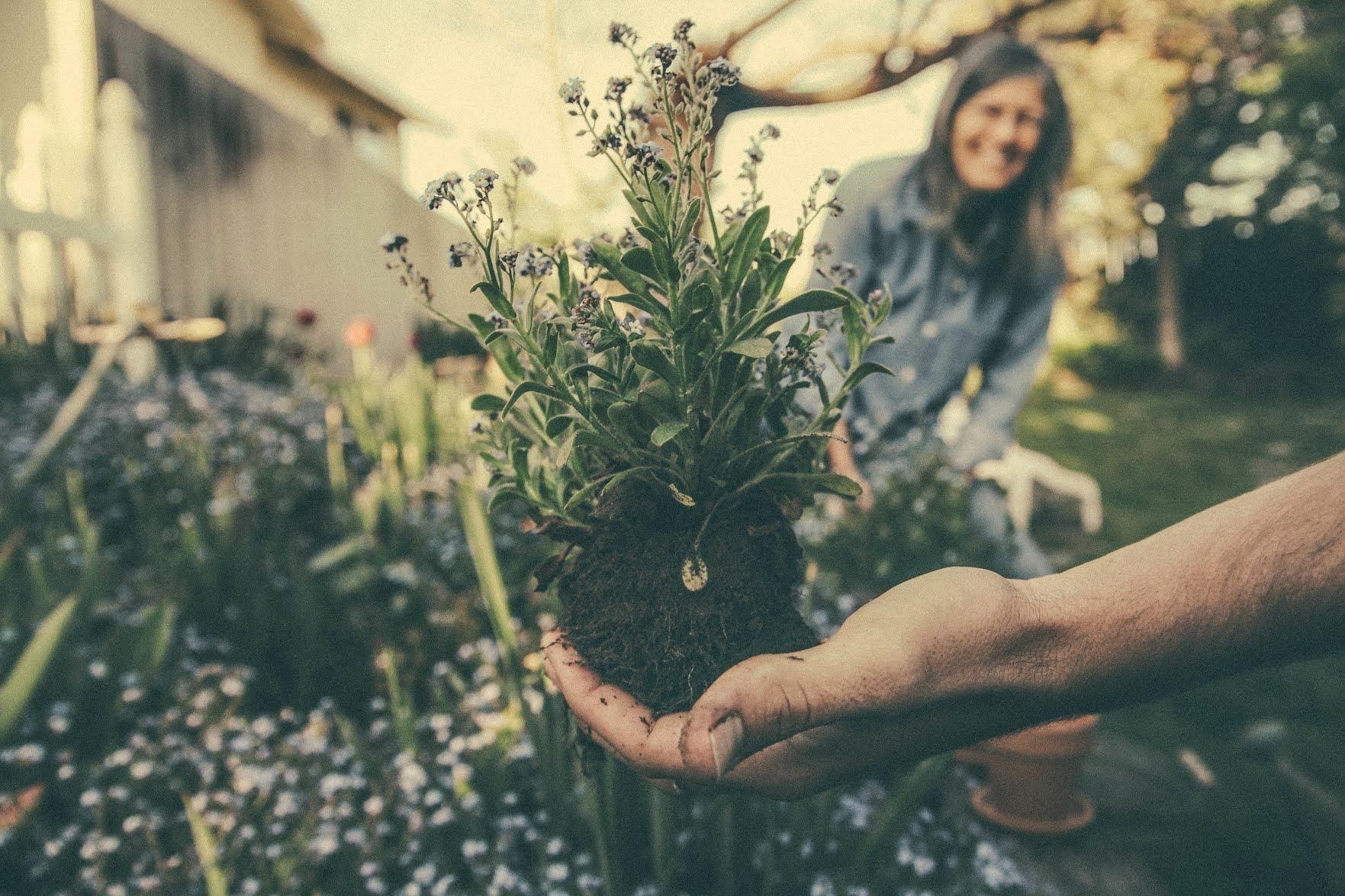 herb garden 7 herbs you need