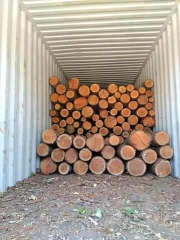 pine logs.jpeg