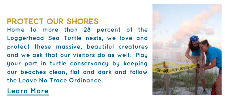 Home to more than 28 percent of the Loggerhead Sea Turtle nests, we love and protect these massive, beautiful creatures and we ask that our visitors do as well. Play your part in turtle conservancy by keeping our beaches clean, flat and dark and follow the Leave No Trace Ordinance.