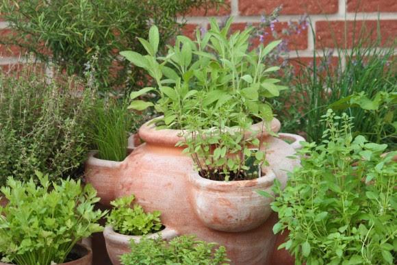 Outdoor herb pot