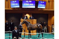 The Runhappy filly consigned as Hip 380 in the ring at Fasig-Tipton
