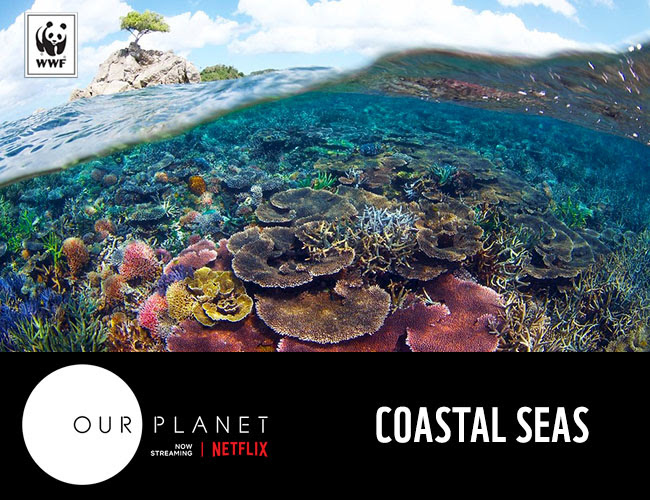Coral reef | Coastal Seas | Our Planet
