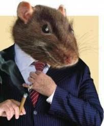 ratos sem saida3
